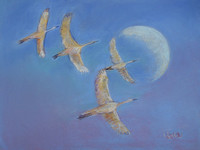SANDHILL CRANES BY DAY MOON