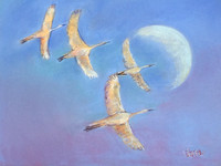 SANDHILL CRANES AND DAY MOON