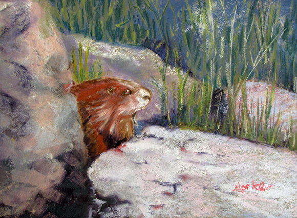 MARMOT ON THE ROCKS