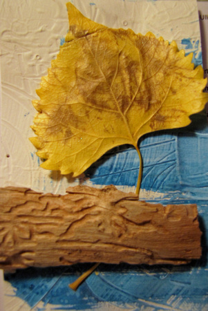 10/26/14 DAY 6 BARK FROM POND COTTONWOOD LEAF_